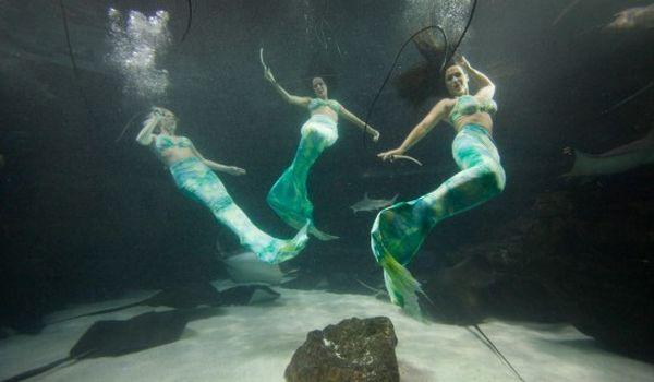 aksi putri duyung di Danau Weeki Wachee, Florida (Foto: odditycentral)