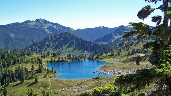 Hutan Pacific Northwest, Amerika Serikat yang kabarnya dihuni Bigfoot (Foto: usparks.about)