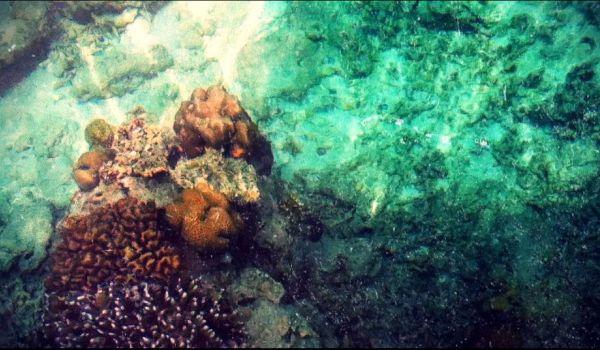 Keindahan bawah laut di Gili Trawangan (Foto: Mutya/Okezone)