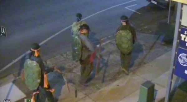 Kura-kura ninja terekam CCTV (Foto: Mirror)