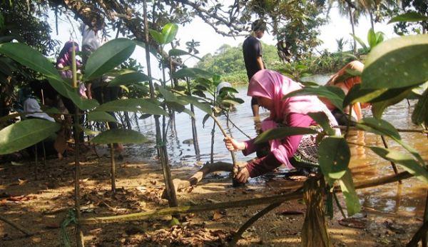 Menanam mangrove di Kondang Merak (Foto: Hari/Okezone)