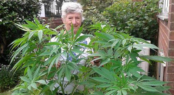 www.rumahcloteh.com Seorang nenek yang sudah pensiun, gemar sekali menanam tanaman hias di pekarangannya. Ia menanam beragam jenis tanaman hias, mulai dari petunia hingga bunga matahari. Namun ada satu tanaman yang membuatnya heran dan aneh.