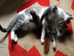 Kucing Adopsi Bayi Tupai