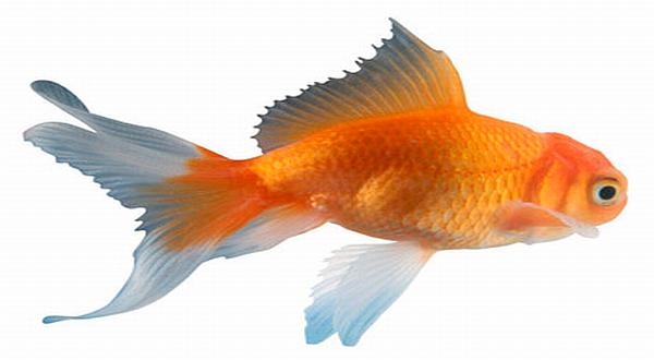 450+ Gambar Hewan Dan Ikan Gratis Terbaik