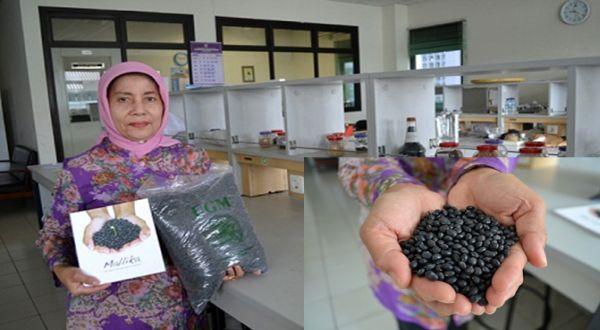 Setyastuti dan varietas kedelai hitam asli Indonesia, Mallika. (Foto: dok. UGM)