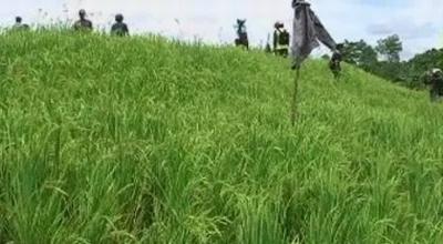 Lahan sawah Bukhori menjadi bukit kecil (Dok: Sindo TV/Ivo Lestari)