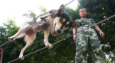 Anjing jalan di tali