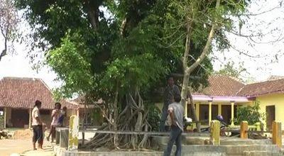 Pohon yang<a href='http://www.menjelma.com'> di</a>duga rumah Sri Wahyuningsih (Foto: Widi N/okezone)