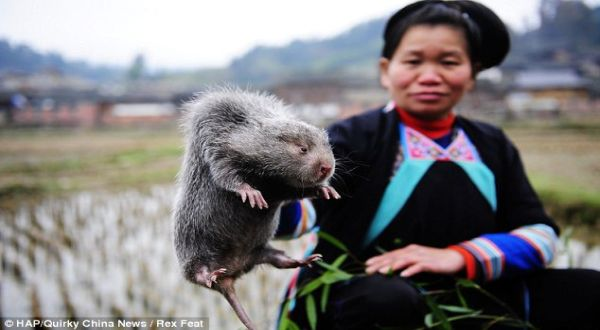 Foto : Quirky China News