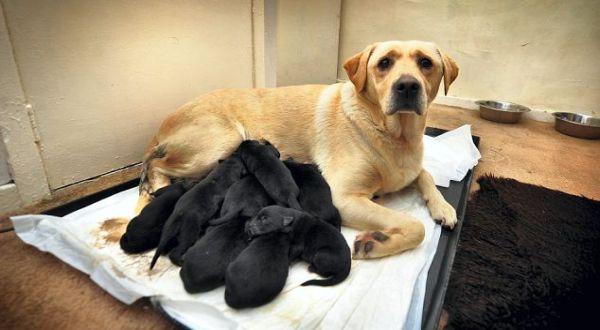 Lucy dengan anak anjingnya (Foto: Daily Mail)