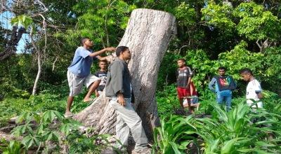 Pohon di Kefamenanu yang berdiri sendiri (Dok: Sefnat Besie/Sindo TV)