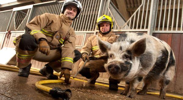 Babi anggota pemadam (Foto: Cater)