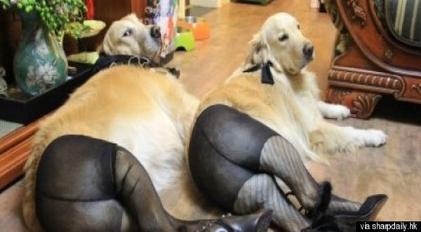 Anjing gunakan stoking (Foto: Huffington Post)
