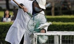 Ayam Jadi Sebab Utama Kasus Flu Burung di China