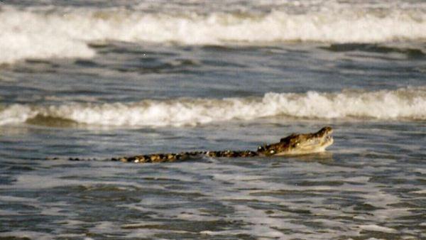 Agen Togel - Buaya Hebohkan Pantai di Balikpapan - Togel ...