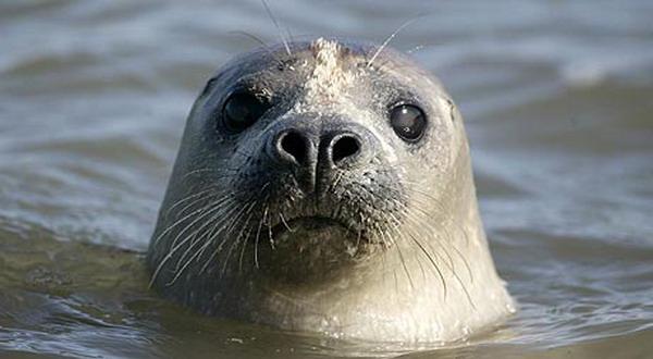 Foto: guardian) london - beberapa hewan yang hidup di air seperti