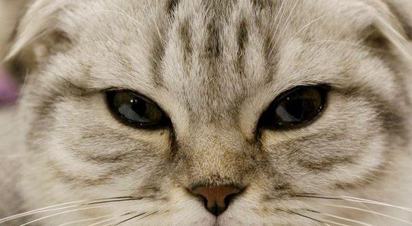 Seekor Kucing Menghebohkan Dunia Maya