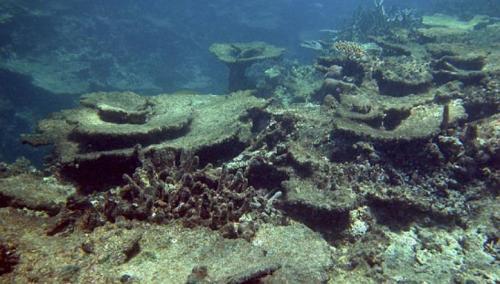 Terumbu karang yang rusak. (foto: Reuters)