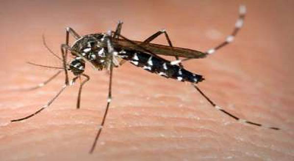 foto: Columbia Mosquito Squad