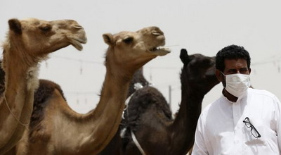 Pemerintah Arab Saudi Peringatkan Warga Jauhi Unta