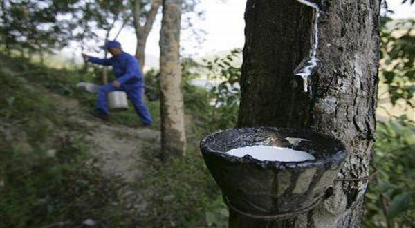 Industri Karet Sumatera Utara Terancam Bangkrut (Ilustrasi: Reuters)