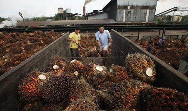 Wilmar targetkan ekspor CPO 10 juta ton di 2014. (Foto: Reuters)
