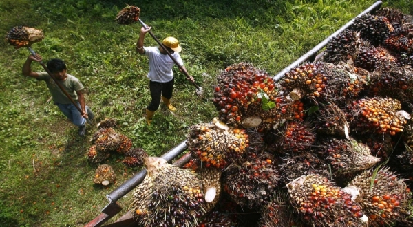 Gandeng Turki, CPO Indonesia masuki pasar Eropa dan Asia Barat (Ilustrasi: Reuters)
