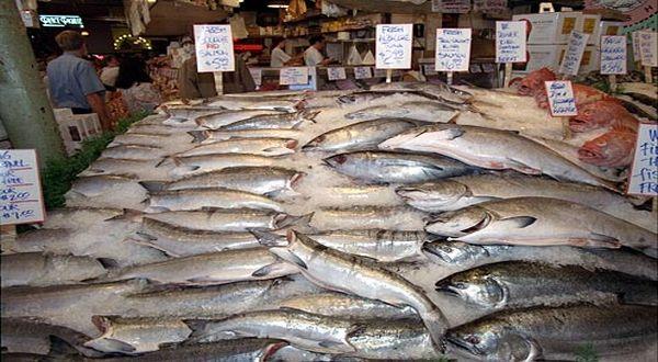 Ilustrasi ikan dan kelautan. (Foto: Reuters)