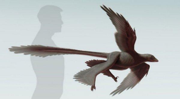Dinosaurus Ini Mampu Terbang dengan Empat Sayap