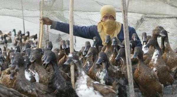 2020, Indonesia Bebas Flu Burung