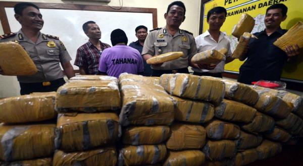 Aceh Produsen Ganja Terbesar di Asia Tenggara
