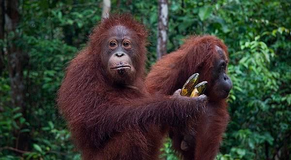 Lima Wilayah Indonesia Bikin Kagum Wisatawan Dunia