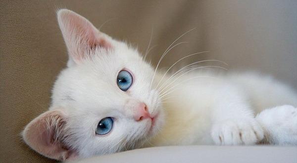 Rabies pada Kucing Lebih Bahaya dari Anjing