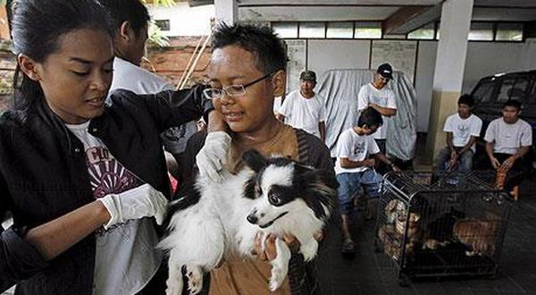 Kasus Rabies di Indonesia Menurun
