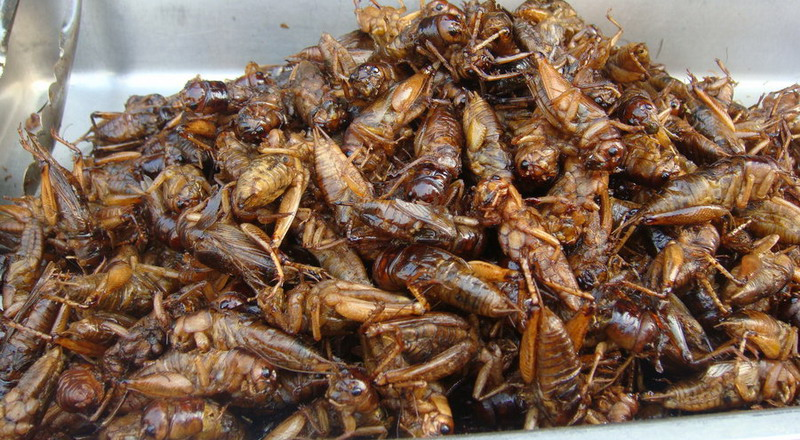 https: img.okeinfo.net content 2015 04 28 298 1141323 ratu-semut-bisa-jadi-suguhan-lezat-7iSCOXiPv9.jpg