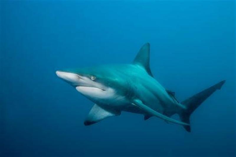 Ikan Hiu Ditemukan Di Kolam Renang Kondominium Okezone News