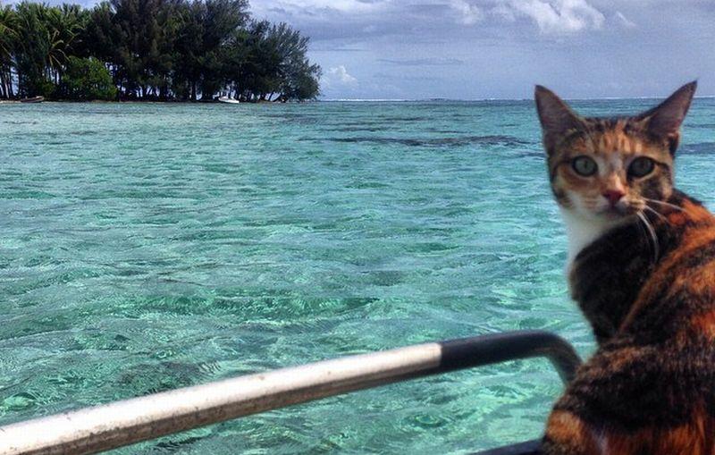 https: img.okeinfo.net content 2016 04 28 406 1374718 kucing-ini-keliling-dunia-vdVwAHLgeV.jpg