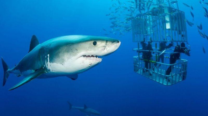 46+ Gambar Kerangka Hewan Ikan HD Terbaik