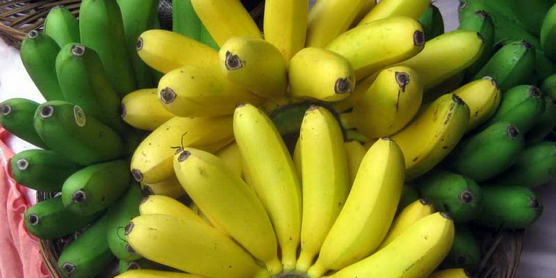 https: img.okeinfo.net content 2016 08 26 298 1473971 beli-pisang-simak-cara-pilih-yang-bagus-berkualitas-WruHV1qB4m.jpg