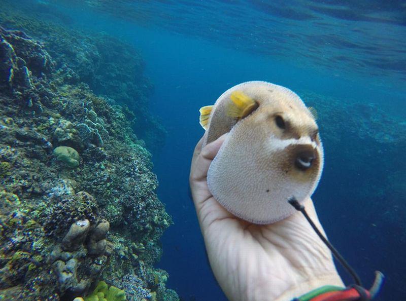 https: img.okeinfo.net content 2016 09 08 406 1485112 travel-blogger-kecam-diver-pemegang-ikan-buntal-zdrkMYqmZG.jpg