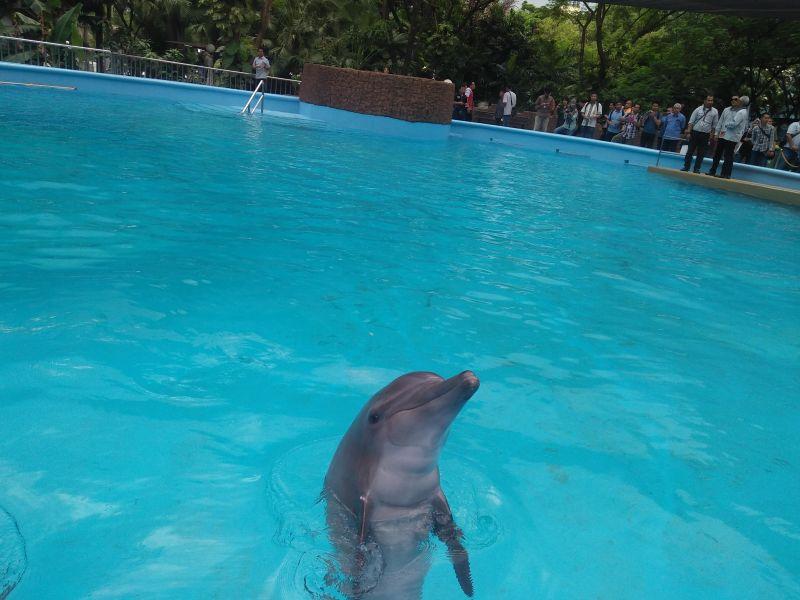 https: img.okeinfo.net content 2016 12 19 481 1570646 berinteraksi-dengan-lumba-lumba-dapat-sembuhkan-penderita-autisme-lho-DcJPvLZCgh.jpg