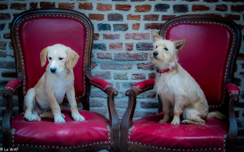 https: img.okeinfo.net content 2016 12 25 298 1575312 serunya-bermain-bersama-anjing-sembari-seruput-kopi-di-cafe-unik-ini-xahTuuu7I8.jpg