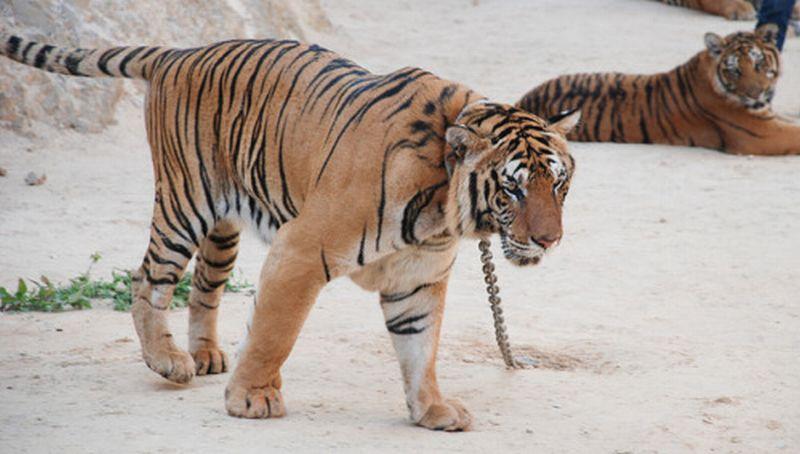 102+ Gambar Binatang Yang Haram Terbaru