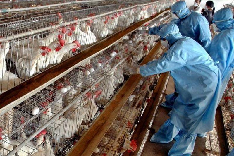 https img.okeinfo.net content 2017 01 24 481 1599284 siaga who peringatkan dunia soal virus flu burung 9j4fpGhUF9.jpg
