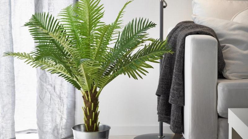 https img.okeinfo.net content 2017 02 17 196 1621025 ingin jadikan rumah sejuk seperti taman pilih tanaman plastik atau tanaman hidup robJlsOzTx.jpg