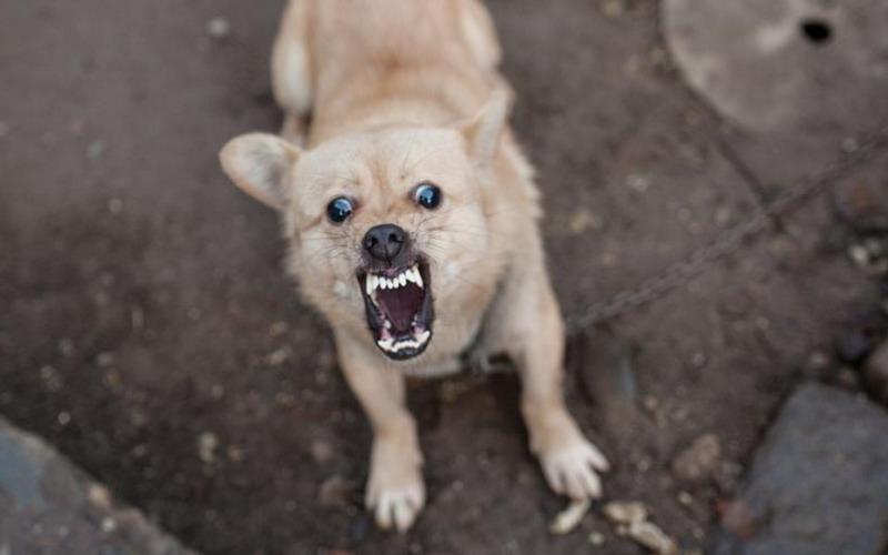 https: img.okeinfo.net content 2017 03 27 481 1651953 waduh-rabies-bisa-merusak-saraf-hingga-sebabkan-kematian-vzEGzTMz8O.jpg