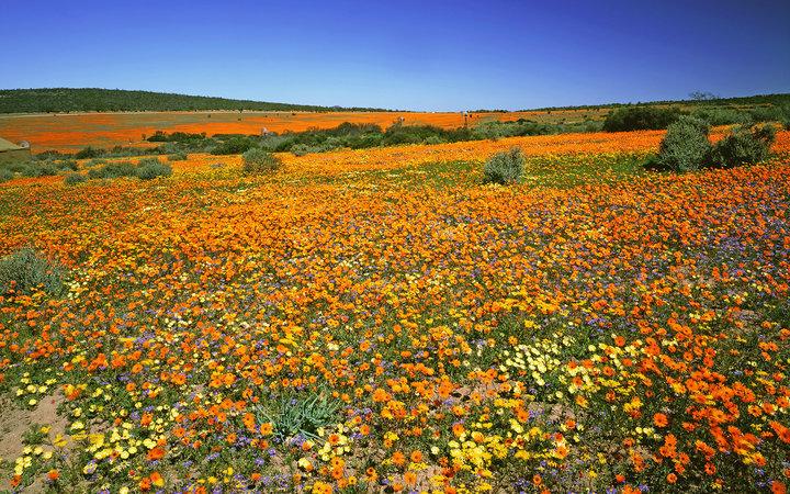 https: img.okeinfo.net content 2017 04 16 406 1668817 cantiknya-musim-mekar-kaktus-sampai-bunga-lili-di-kebung-bunga-seluruh-dunia-08svEONewx.jpg