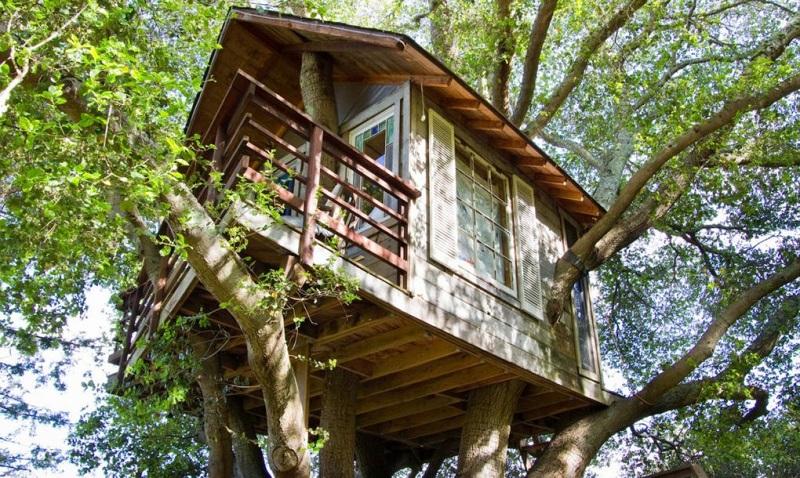 https: img.okeinfo.net content 2017 04 21 470 1673843 sewa-rumah-pohon-berusia-150-tahun-ini-dipatok-rp3-6-juta-malam-sgii1gPGnR.jpg