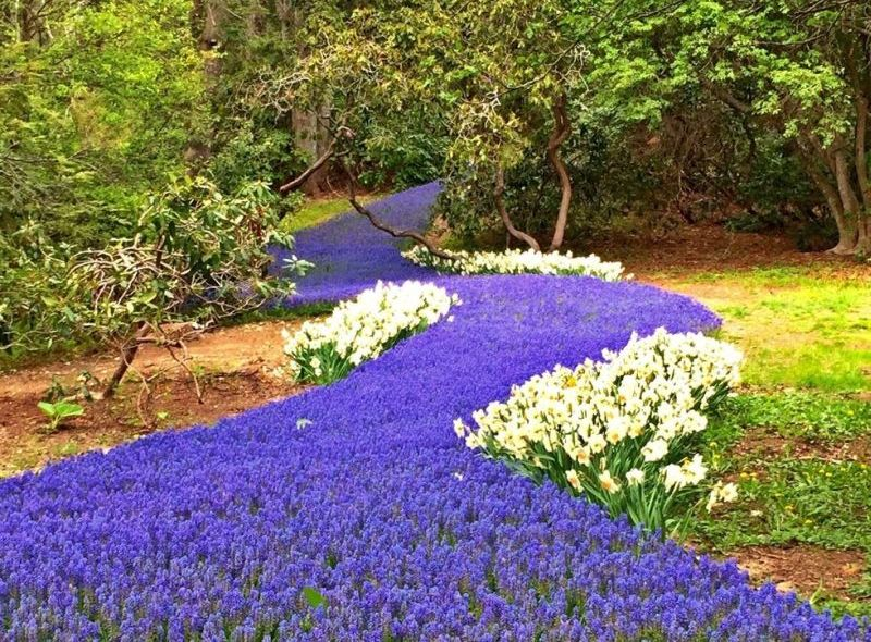 https: img.okeinfo.net content 2017 04 28 406 1678885 wow-bunga-ungu-bermekaran-bak-aliran-sungai-yang-indah-okl0BZYZLN.jpg