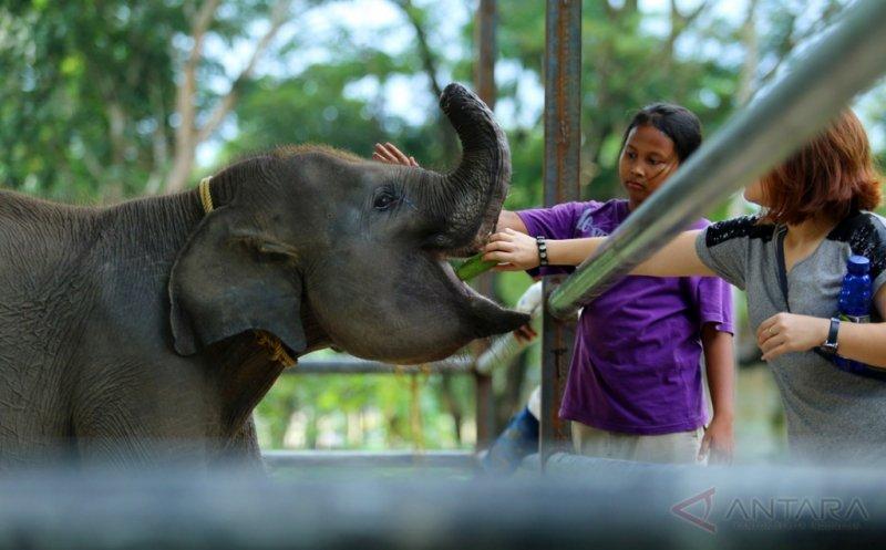 https: img.okeinfo.net content 2017 05 02 406 1680991 lebih-dekat-dengan-erin-anak-gajah-yang-belalainya-terpotong-akibat-dijerat-pemburu-enuK6xXzBw.jpg